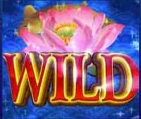Lucky Koi Wild